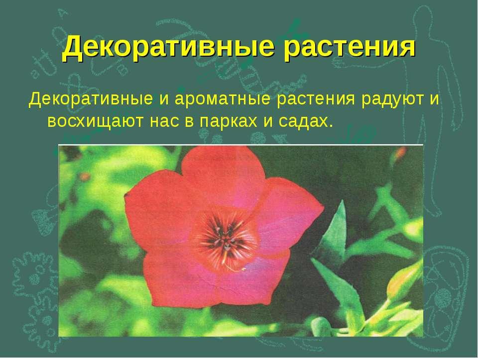 Декоративные растения Декоративные и ароматные растения радуют и восхищают на...