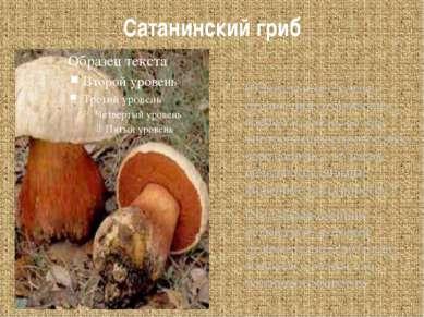 Сатанинский гриб Смертельных случаев отравления сатанинским грибом не было, н...