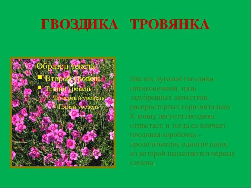 ГВОЗДИКА ТРОВЯНКА Цветок луговой гвоздики пятиконечный, пять зазубренных лепе...