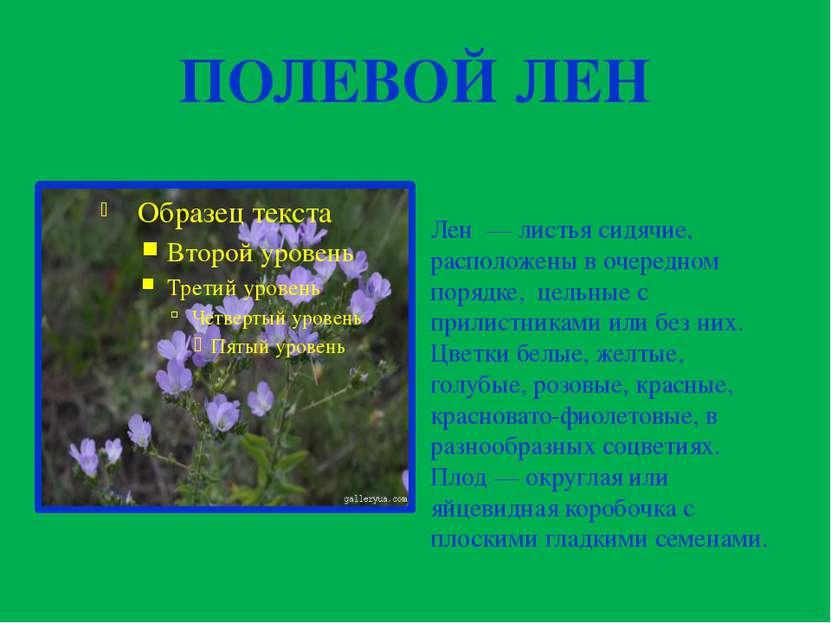 ПОЛЕВОЙ ЛЕН Лен —листья сидячие, расположены в очередном порядке, цельные с...