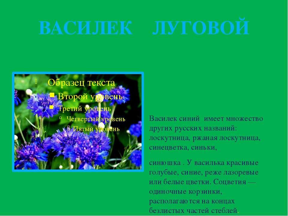 ВАСИЛЕК ЛУГОВОЙ Василек синий имеет множество других русских названий: лоскут...