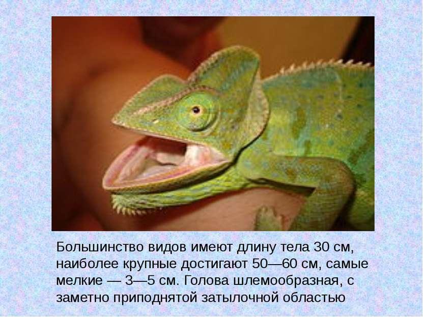 Большинство видов имеют длину тела 30см, наиболее крупные достигают 50—60см...