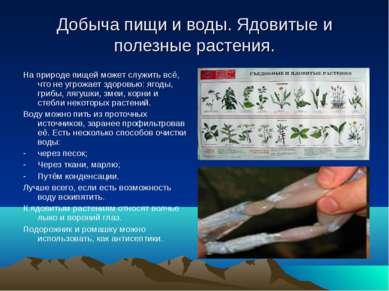 Добыча пищи и воды. Ядовитые и полезные растения. На природе пищей может служ...