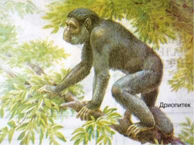 Кто он – наш предок? Самым древним предком человека и современной обезьяны сч...