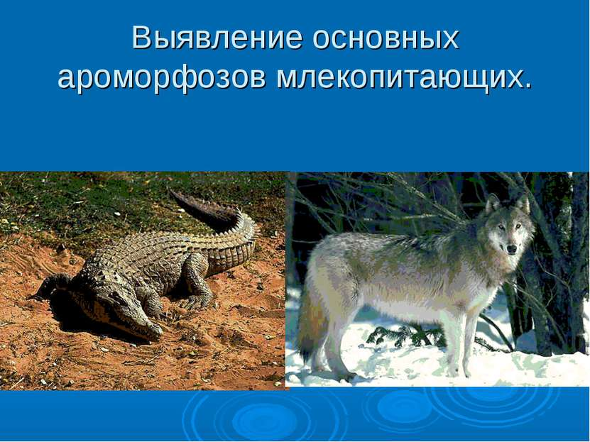 Выявление основных ароморфозов млекопитающих.