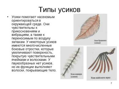 * Типы усиков Усики помогают насекомым ориентироваться в окружающей среде. Он...