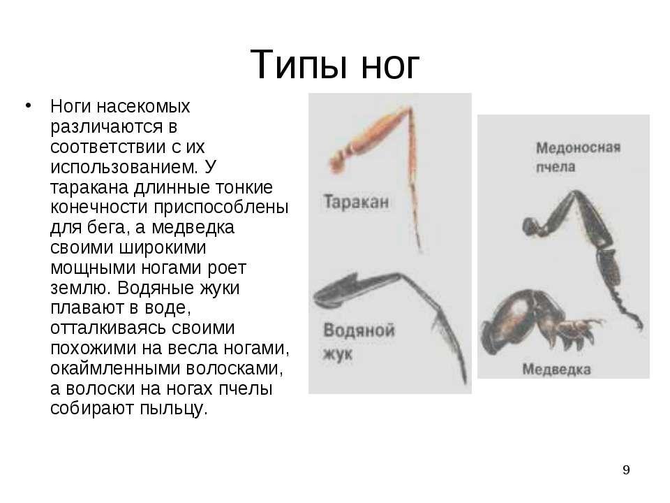* Типы ног Ноги насекомых различаются в соответствии с их использованием. У т...