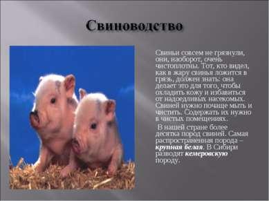 Свиньи совсем не грязнули, они, наоборот, очень чистоплотны. Тот, кто видел, ...