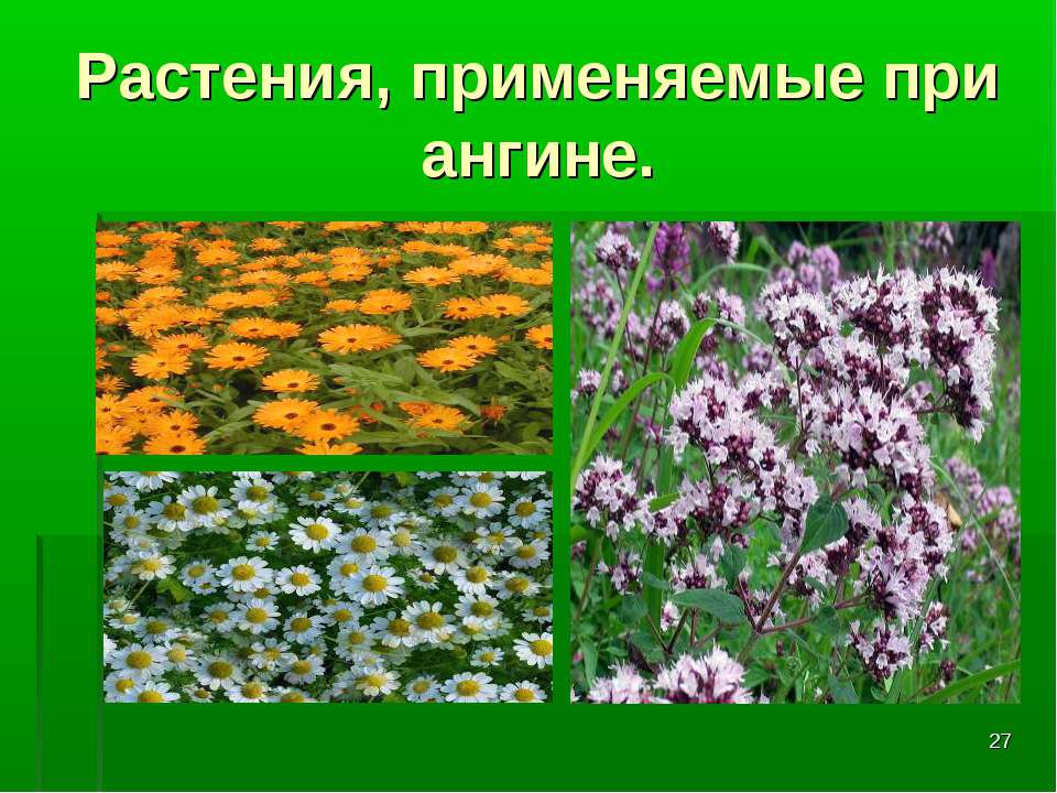 * Растения, применяемые при ангине.
