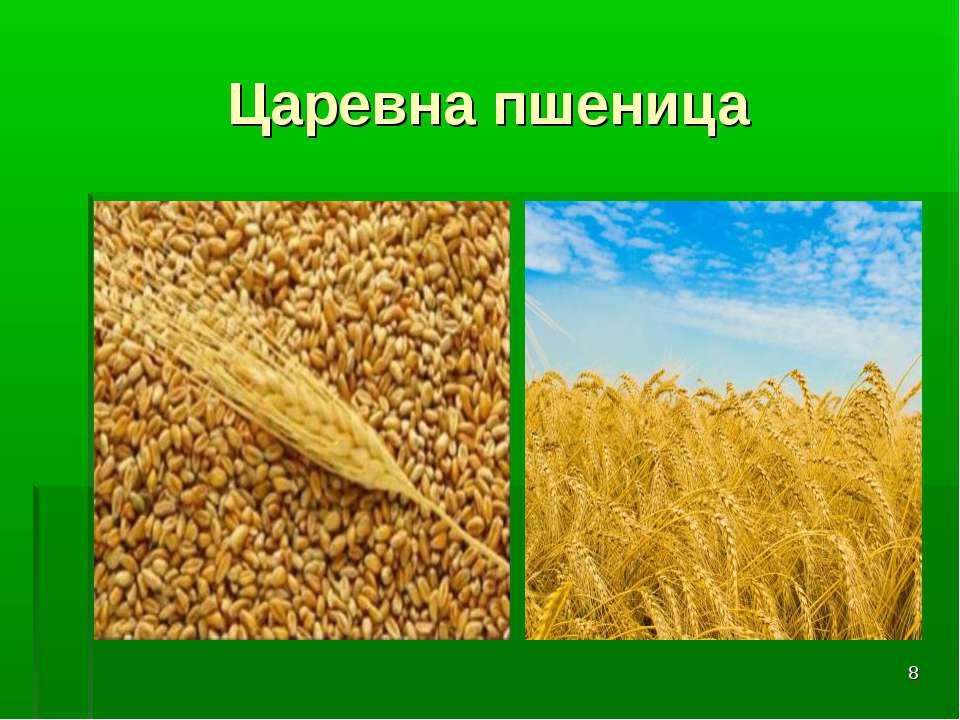* Царевна пшеница
