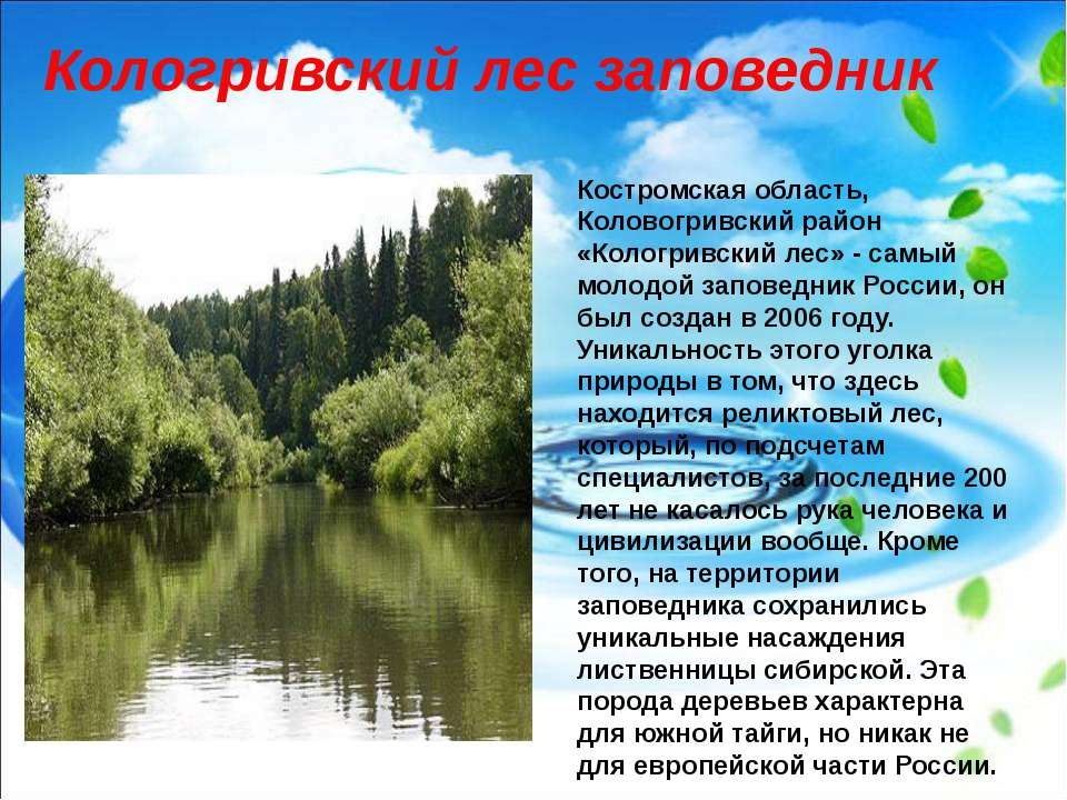 Костромская область, Коловогривский район «Кологривский лес» - самый молодой ...