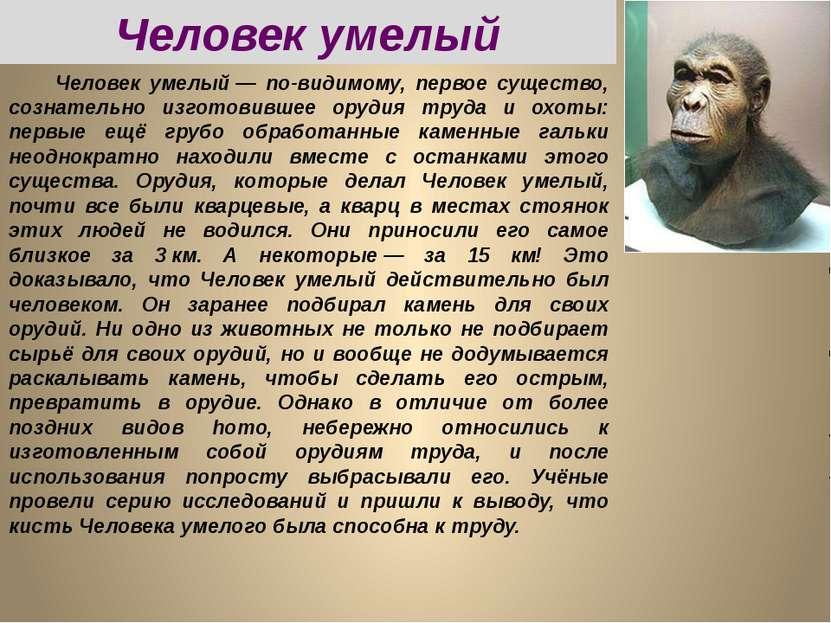 Человек умелый— по-видимому, первое существо, сознательно изготовившее оруди...