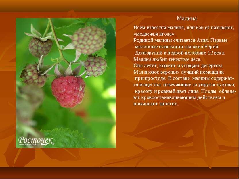 Малина Всем известна малина, или как её называют, «медвежья ягода». Родиной м...