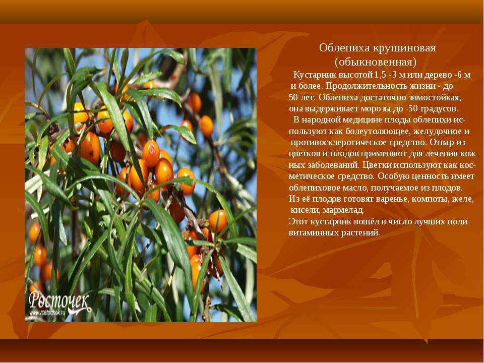 Облепиха крушиновая (обыкновенная) Кустарник высотой 1,5 -3 м или дерево -6 м...