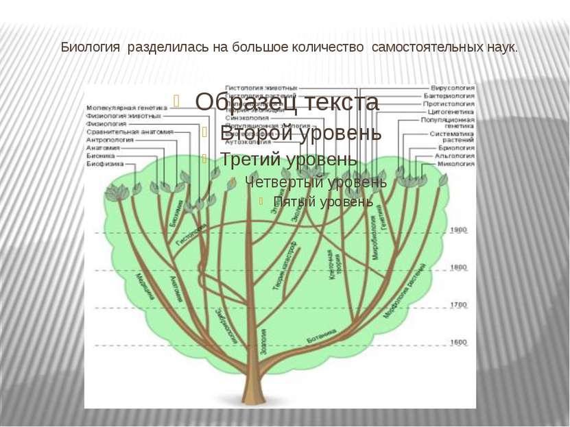 Биология разделилась на большое количество самостоятельных наук.