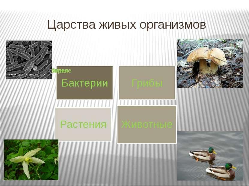 Царства живых организмов