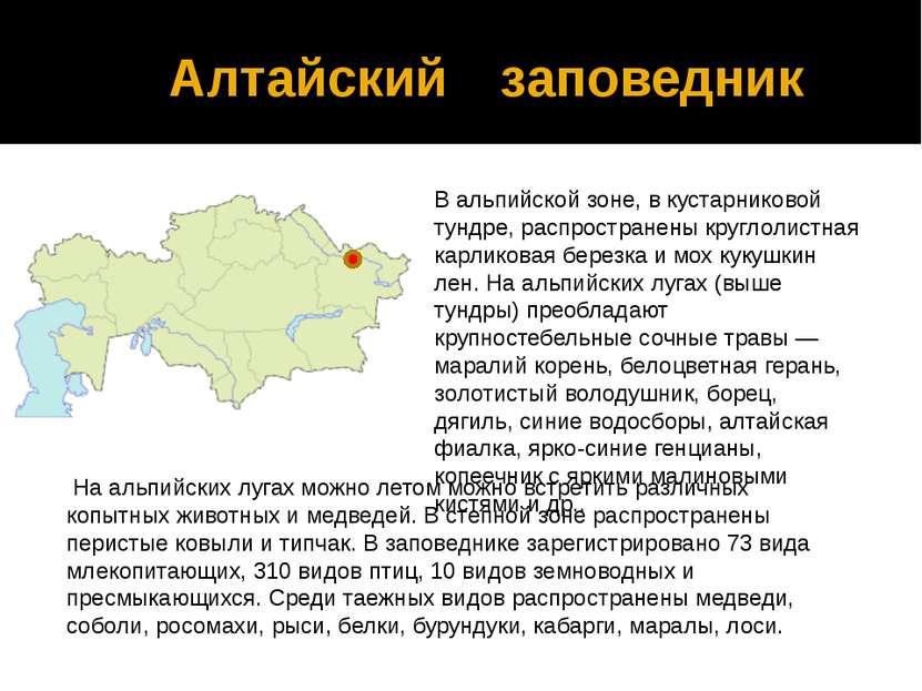 Алтайский заповедник В альпийской зоне, в кустарниковой тундре, распространен...