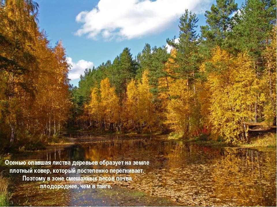 Осенью опавшая листва деревьев образует на земле плотный ковер, который посте...