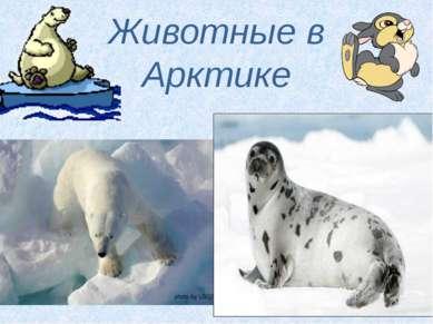 Животные в Арктике