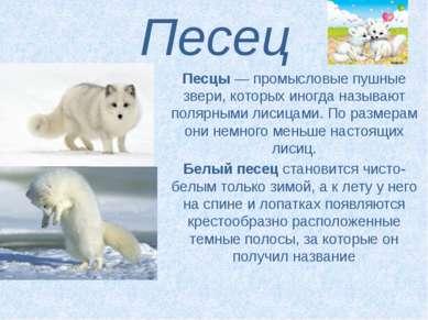 Песец Песцы— промысловые пушные звери, которых иногда называют полярными лис...