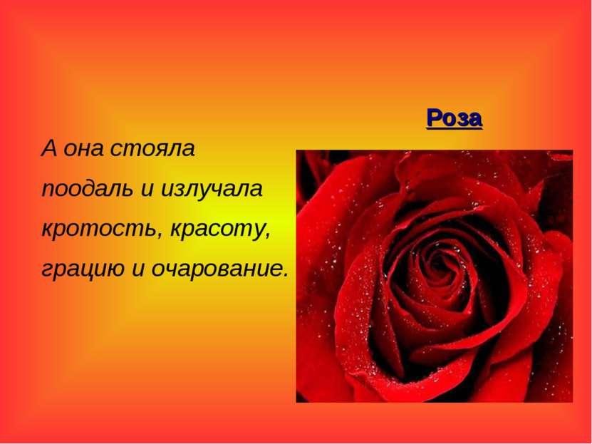 А она стояла поодаль и излучала кротость, красоту, грацию и очарование. Роза