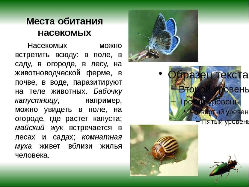 Места обитания насекомых Насекомых можно встретить всюду: в поле, в саду, в о...