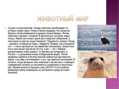 Скуден и животный мир. Среди животных преобладают те, которых кормит море: пт...