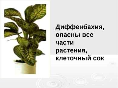 Диффенбахия, опасны все части растения, клеточный сок