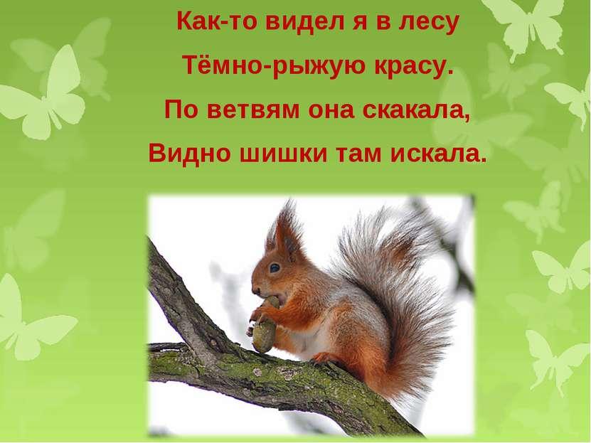 Как-то видел я в лесу Тёмно-рыжую красу. По ветвям она скакала, Видно шишки т...