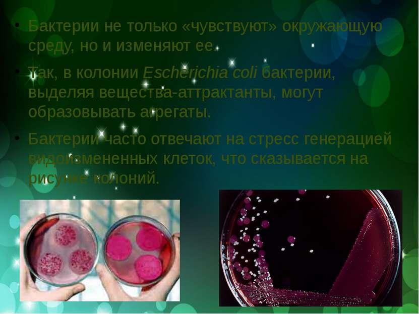Бактерии не только «чувствуют» окружающую среду, но и изменяют ее. Так, в кол...
