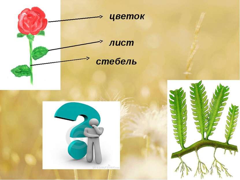 стебель лист цветок