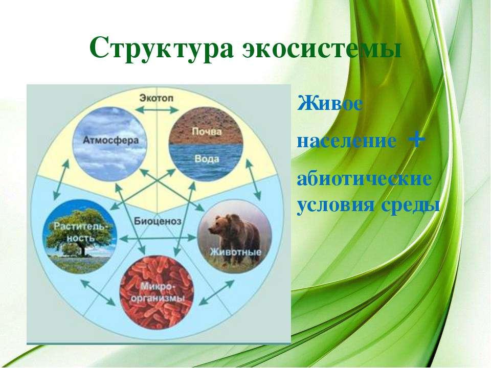 Структура экосистемы Живое население + абиотические условия среды