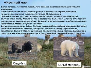 Фауна острова небогата видами, что связано с суровыми климатическими условиям...