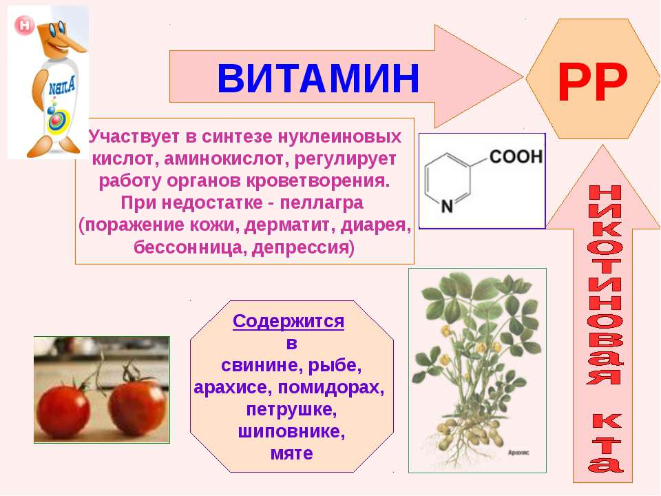 ВИТАМИН PP Участвует в синтезе нуклеиновых кислот, аминокислот, регулирует ра...