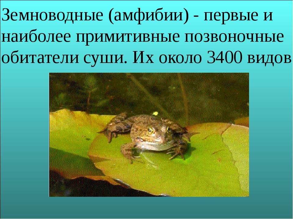Земноводные (амфибии) - первые и наиболее примитивные позвоночные обитатели с...