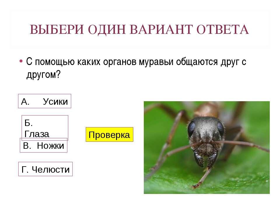ВЫБЕРИ ОДИН ВАРИАНТ ОТВЕТА С помощью каких органов муравьи общаются друг с др...