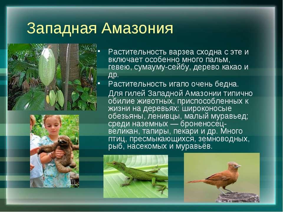 Западная Амазония Растительность варзеа сходна с эте и включает особенно мног...