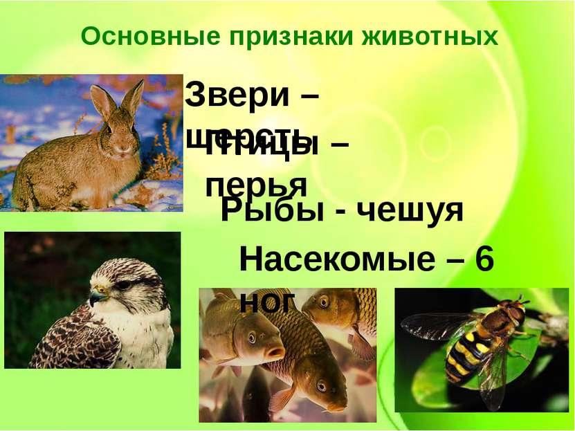 Основные признаки животных Звери – шерсть Рыбы - чешуя Птицы – перья Насекомы...