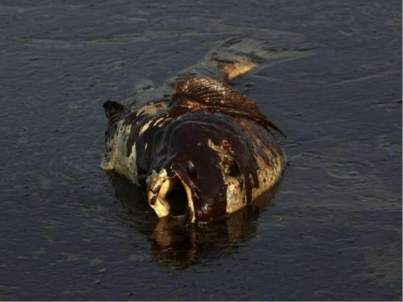 Основной загрязнитель океана – нефть. Как правило, это связано с транспортиро...