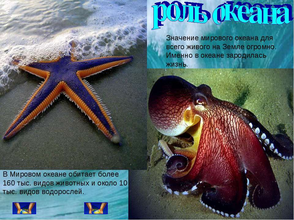 Значение мирового океана для всего живого на Земле огромно. Именно в океане з...