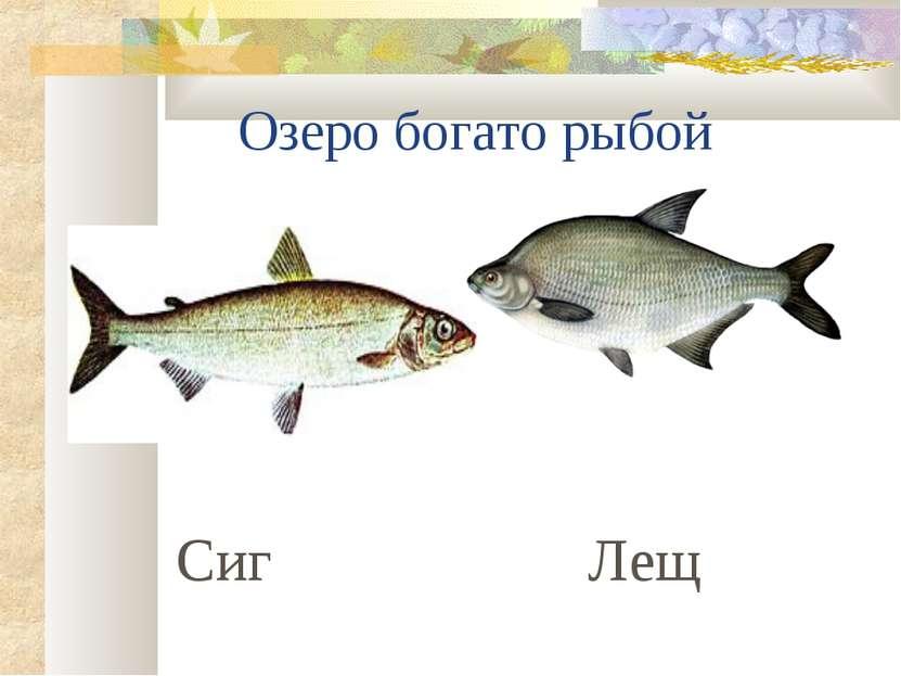 Озеро богато рыбой Сиг Лещ