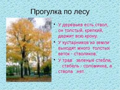 Прогулка по лесу У деревьев есть ствол, он толстый, крепкий, держит всю крону...