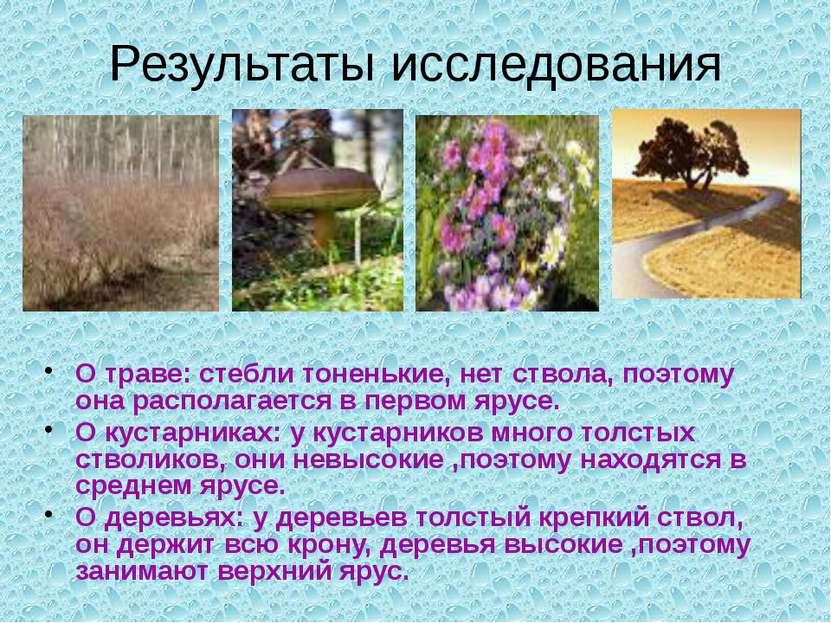 Результаты исследования О траве: стебли тоненькие, нет ствола, поэтому она ра...