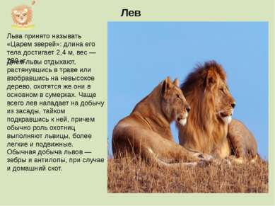 Льва принято называть «Царем зверей»: длина его тела достигает 2,4 м, вес — 2...