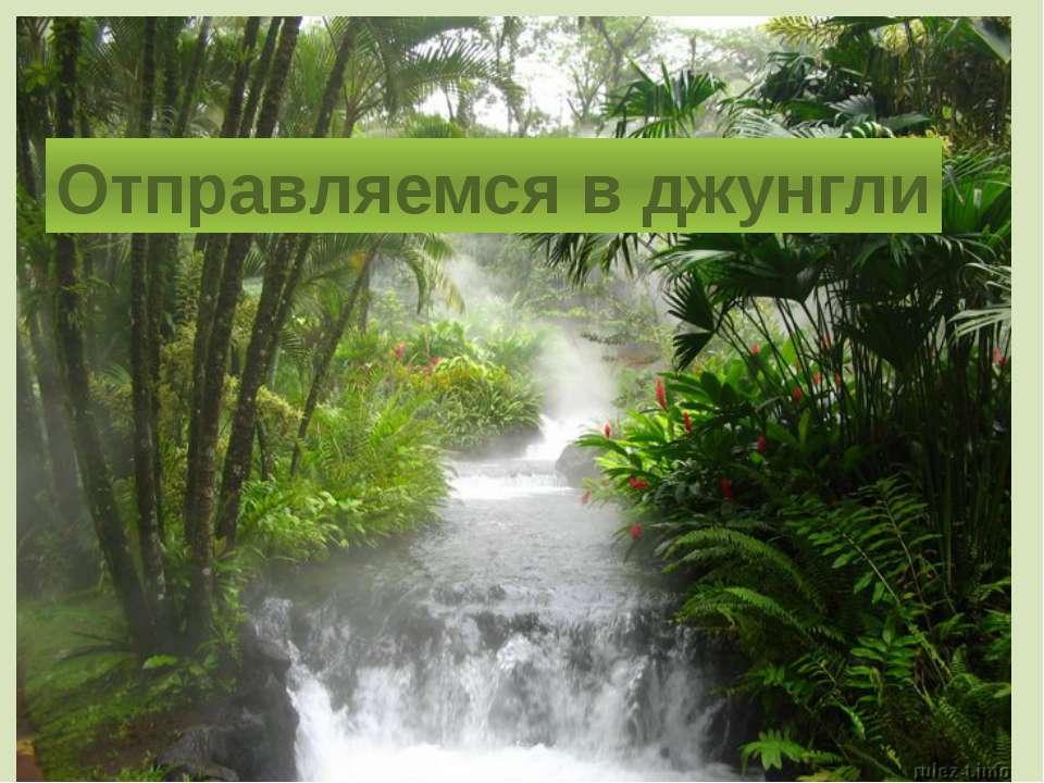 Отправляемся в джунгли