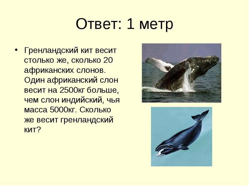 Ответ: 1 метр Гренландский кит весит столько же, сколько 20 африканских слоно...
