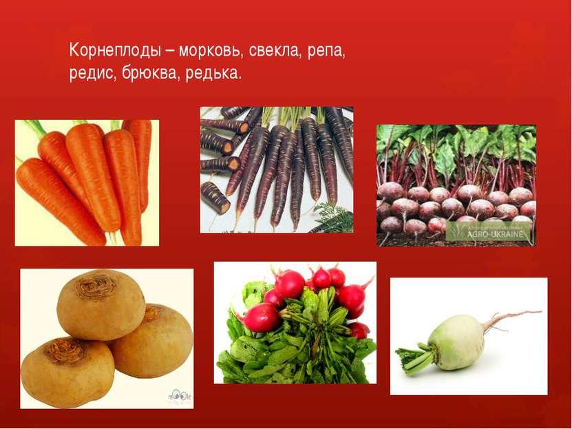 Корнеплоды – морковь, свекла, репа, редис, брюква, редька.