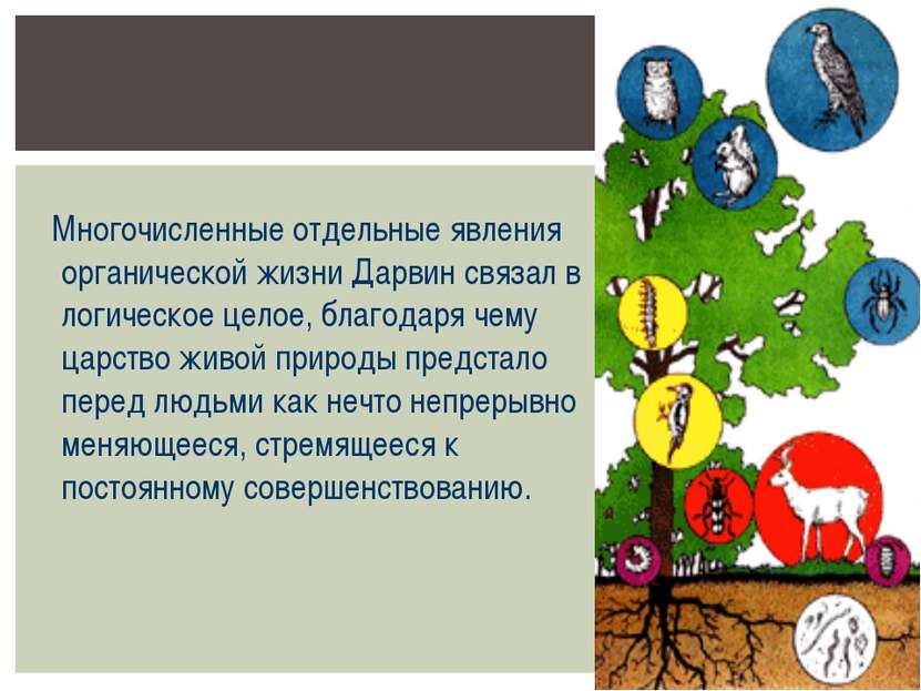 Многочисленные отдельные явления органической жизни Дарвин связал в логическо...