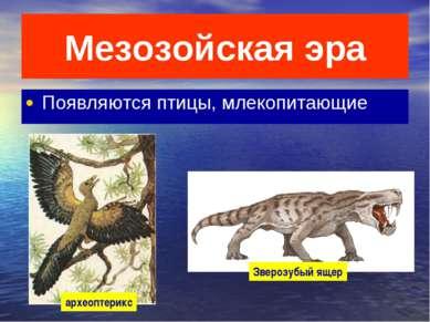 Мезозойская эра Появляются птицы, млекопитающие археоптерикс Зверозубый ящер