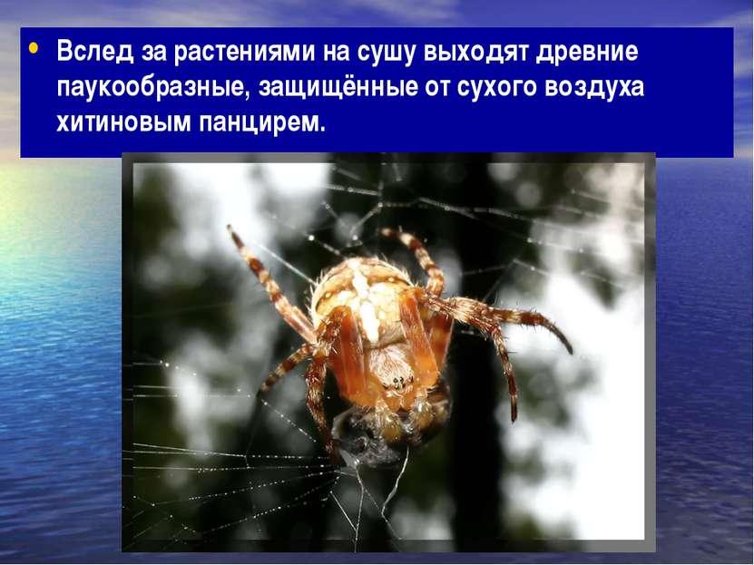 Вслед за растениями на сушу выходят древние паукообразные, защищённые от сухо...
